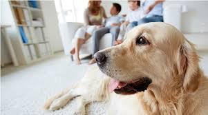 Como debe establecerse la tenencia de mascotas en una propiedad horizontal?