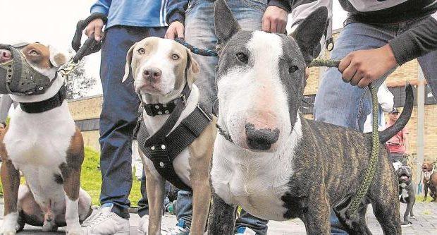 Se pueden prohibir las mascotas peligrosas en una propiedad horizontal?