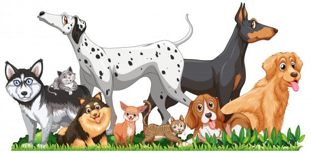 ¿Como será la vacunación antirrábica en perros y gatos durante la pandemia?